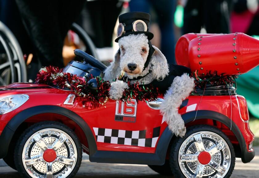 The Gaslamp Holiday Pet Parade (Courtesy photo)