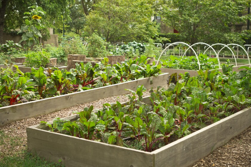 Building a raised garden is a good way to improve your soil for growing vegetables.