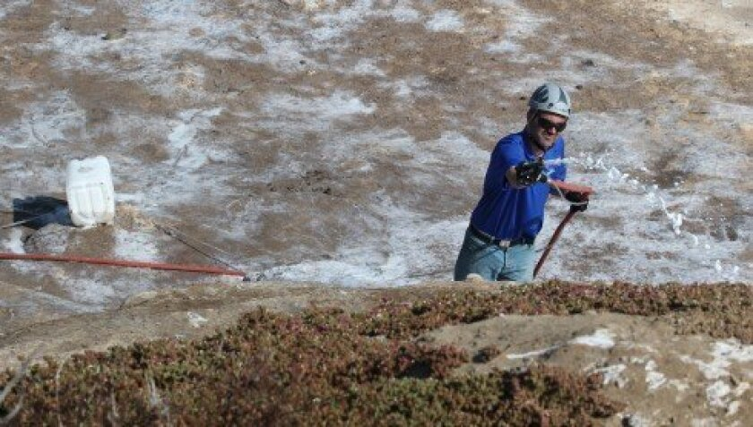 A worker with Blue Eagle Distribution sprays guano-eating, microbial foam on the rocks at La Jolla Cove early Monday morning, June 17.