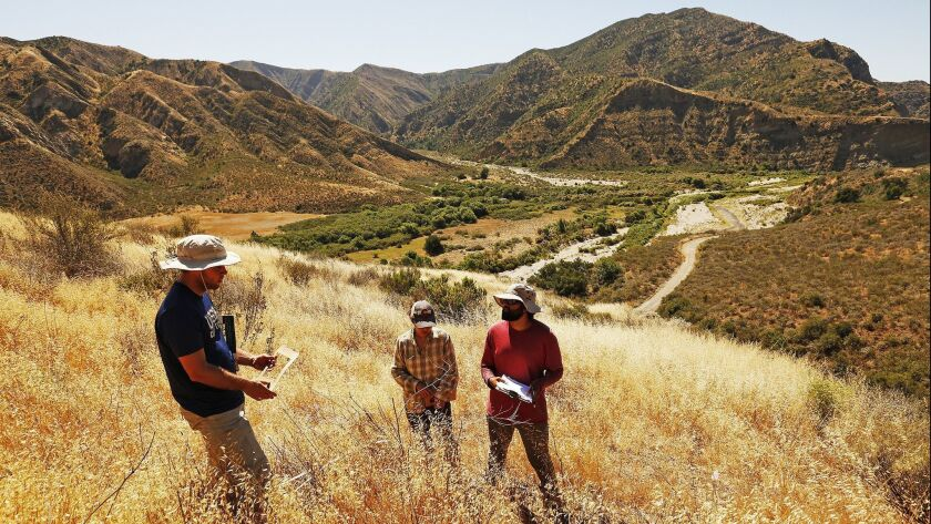 UC researchers Shane Dewees, left, Stephanie Ma and Sameer Saroa check a restoration site near Lake Piru in Los Padres National Forest. Most of the native shrub seedlings they planted did not survive.