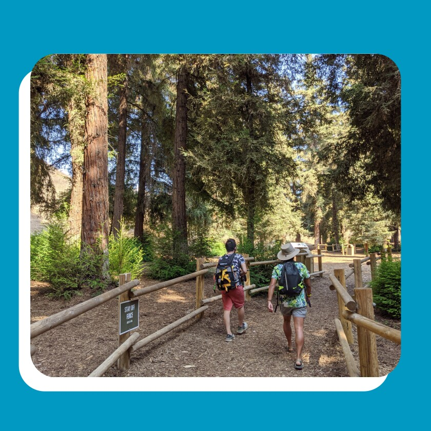 Two hikers on a trail lined with redwood trees.