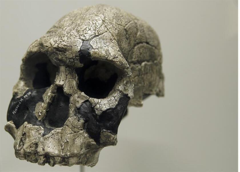 Investigadores chinos descubrieron que la separación genética entre los asiáticos y europeos modernos se produjo hace aproximadamente 40.000 años, según un estudio publicado hoy en la revista especializada Cell. EFE/Archivo