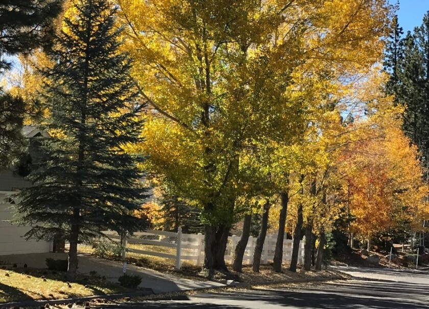 Fall colors are almost at peak in Big Bear Lake.