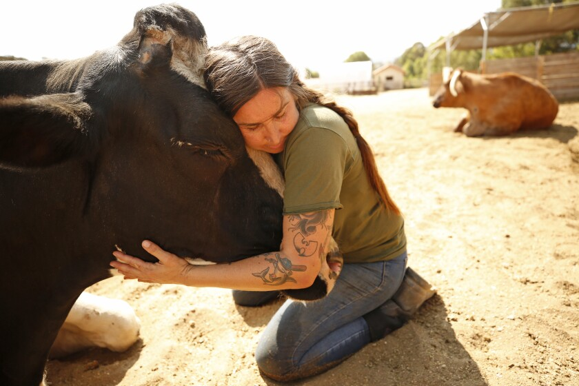 A woman kneels on the dirt as she gently hugs the head of a cow.