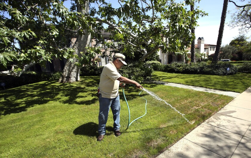 Landscaper Miguel Herrera waters the front lawn of a home in Beverly Hills on April 3, 2014.