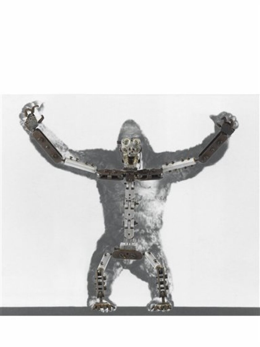 This undated image provided by Christie's Images Ltd.2009, on Friday Oct. 9 2009, shows a 22-inch armature (metal skeleton) which was used in the 1933 film 'King Kong' to allow the animated ape to scale the Empire State Building in the final scenes.The armature, estimated to reach pounds 100,000-150,000 (US$ 160,000-US$240,000) is up for auction in London on Tuesday Nov. 24.(AP photo/Christie's Images Ltd. 2009,HO)