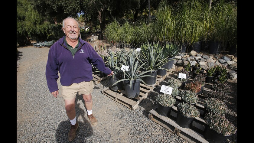 Laurie Park talks about the drought-tolerant succulents he stocks on the grounds of Plantenders nursery in Silverado Canyon.