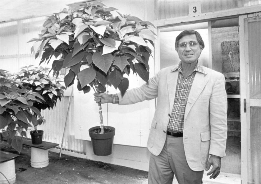 Paul Ecke Jr., with a pointsettia tree.