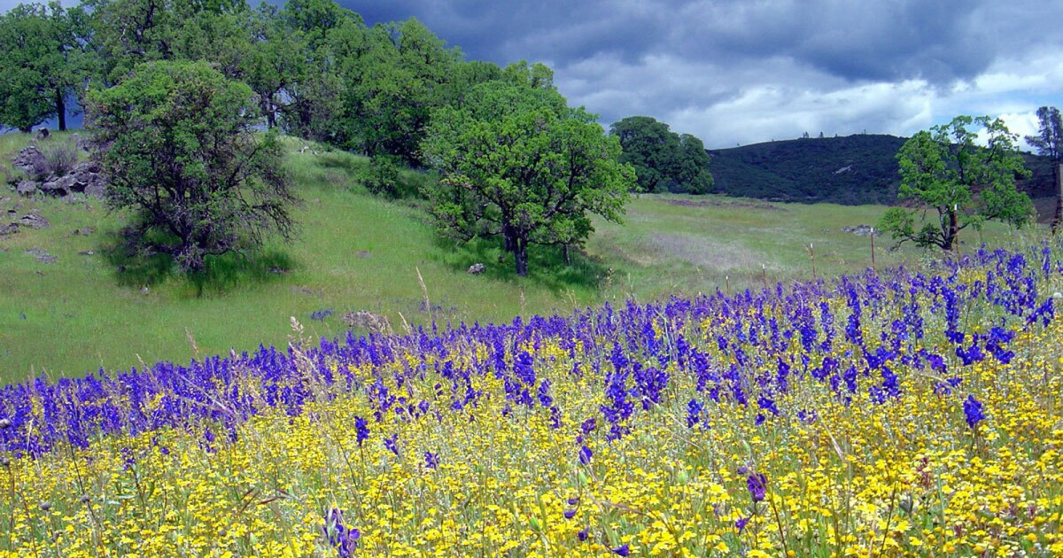 Scientists see climate change in action in California wildflower fields