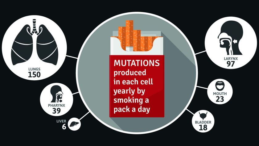 This graphic shows the average number of mutations produced each year in a given type of cell by smoking a pack of cigarettes every day.