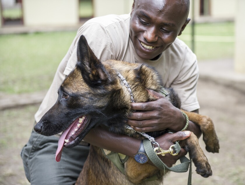 Dogs showed off their skills during the canine detection dog graduation day held outside the town of Arusha, Tanzania.