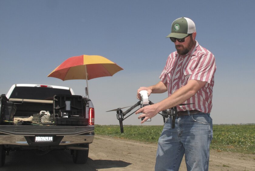 In this photo taken July 25, 2016, Danny Royer, vice president of technology at Bowles Farming Co., prepares to pilot a drone over a tomato field near Los Banos, Calif. The farm hired Royer this year to oversee drones equipped with a state-of-the-art thermal camera. The drone can scan from a bird's