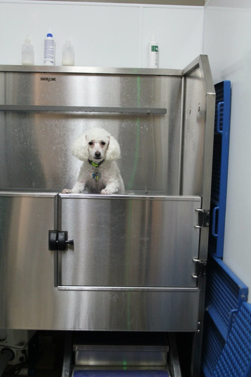 Testing out the new tub at Torrey Pines Animal Hospital.