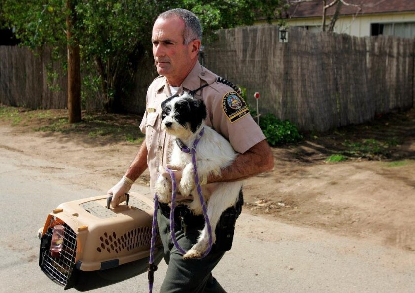 San Diego Animal Control Officer Mitchell Levy walks out with one of the 60 dogs that were at a Lakeside home.