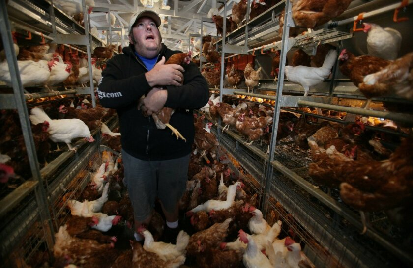 Hilliker's Ranch Fresh Eggs, Inc. has spent $220,000 upgrading his hens' living conditions to be compliant with the new regulations. He sells his eggs locally in San Diego County, through farmers' markets and grocery stores.