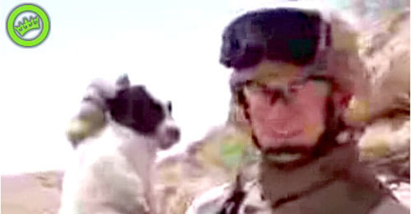 VIDEO: The Marine holds the puppy before apparently throwing the animal off a cliff