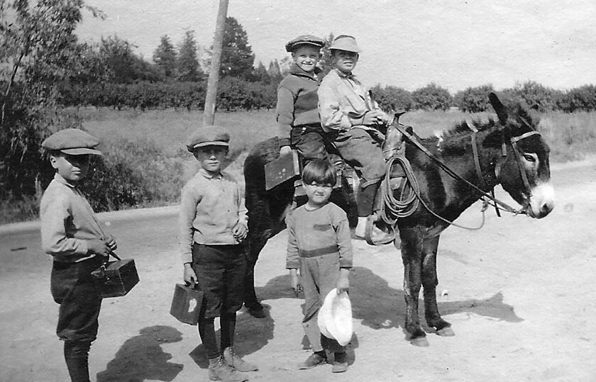 Children from La Cañada's Moses family ride their donkey, Chili Beans, from their home on Palm Drive to school, circa 1923. The photo is part of a virtual tour of Lanterman House being offered to students during the coronavirus pandemic.