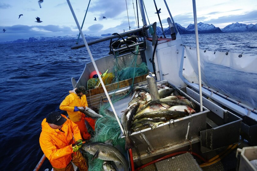 FILE - This  is a Jan 1, 2016 file photo of  Gunnar Johansen, left,  and Trond Dalgard fish for cod in the Norwegian Sea near Gryllefjord, northern Norway. Ahead of a June 23 referendum on whether to quit the European Union, Britons are looking across the North Sea to Norway for clues on what life