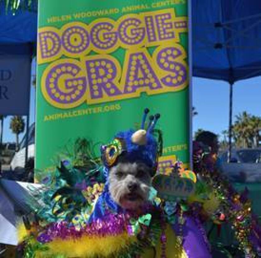 Helen Woodward Animal Center's Mardi Gras festivities will be held on Sunday, Feb. 26 from 10 a.m.-noon at the Farmer's Market in the Del Rayo Village Shopping Center in Rancho Santa Fe.