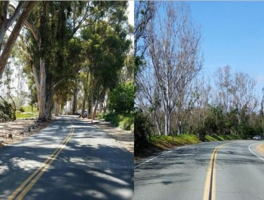 The tree cover in 2001 versus today on Linea del Cielo.