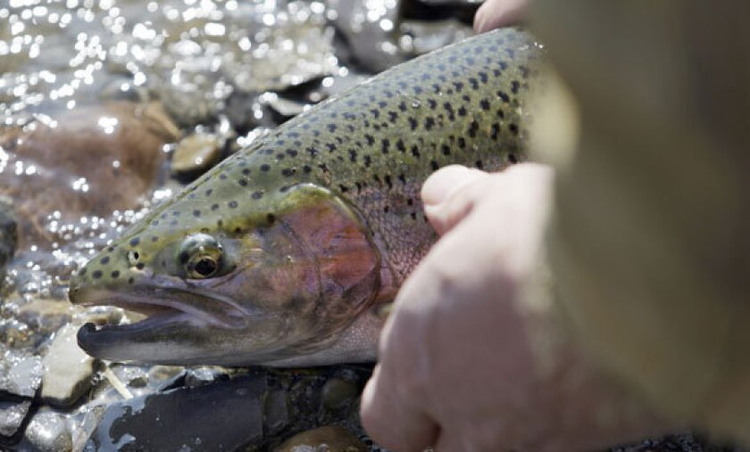 Hunters, anglers report warming winters bad for wildlife