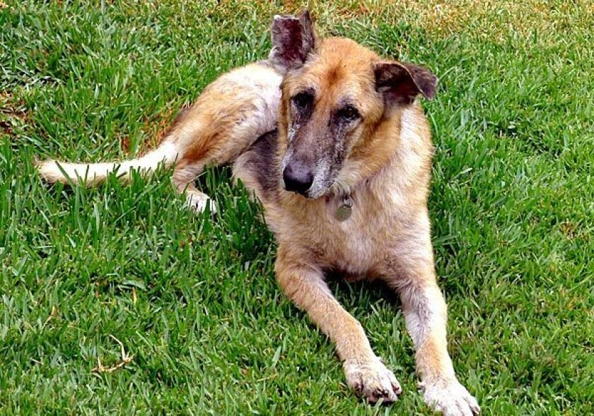 """Times reporter Rene Lynch adopted Rambo, formerly known as Sid (""""skinny itchy dog"""") in September. She then began to wonder about those animal rescuers who kept the dog alive even though he was such a long shot for adoption."""