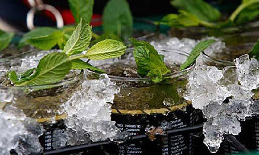 Kentucky Derby 2013: A mint julep recipe now being served