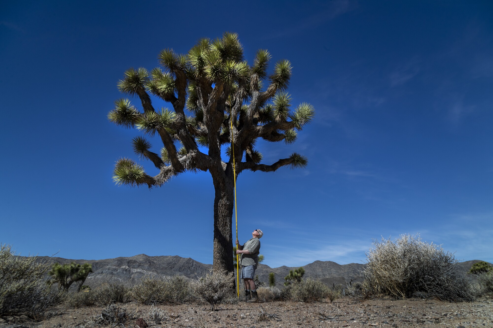 A person holds a long instrument against a Joshua tree.