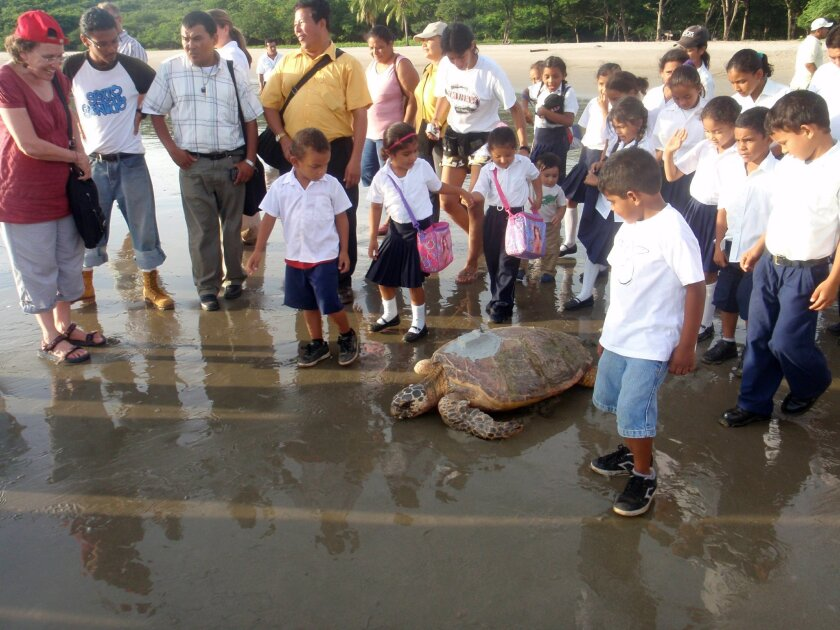 People from El Maculis, El Salvador, follow a tagged hawksbill turtle to the water. Conservationists say without community support, the hawksbills are likely to disappear.