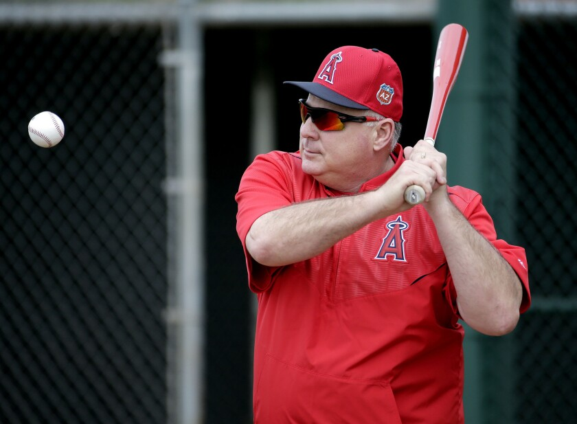 Angels Manager Mike Scioscia hits to players during a spring training workout on Feb. 19.