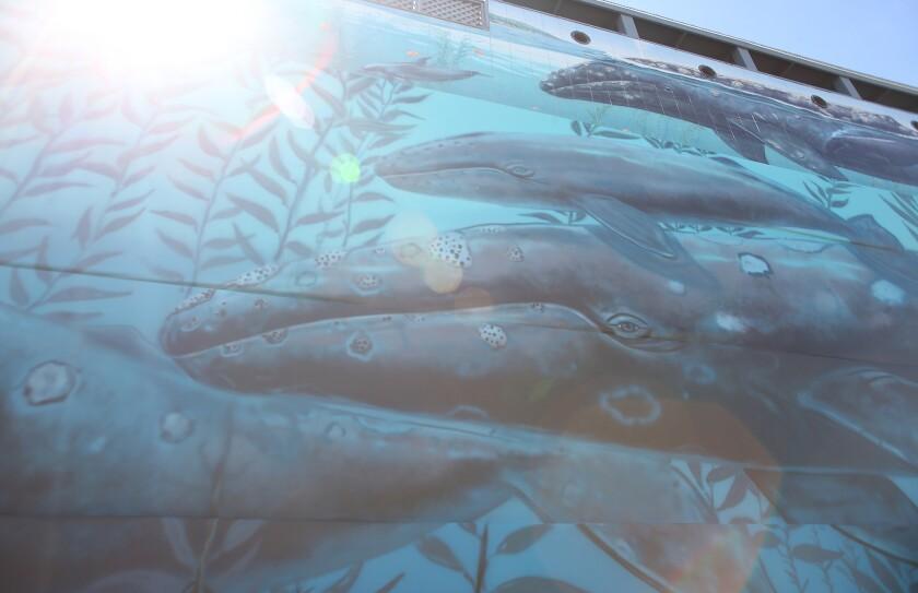 tn-dpt-me-wyland-mural-laguna-5.JPG