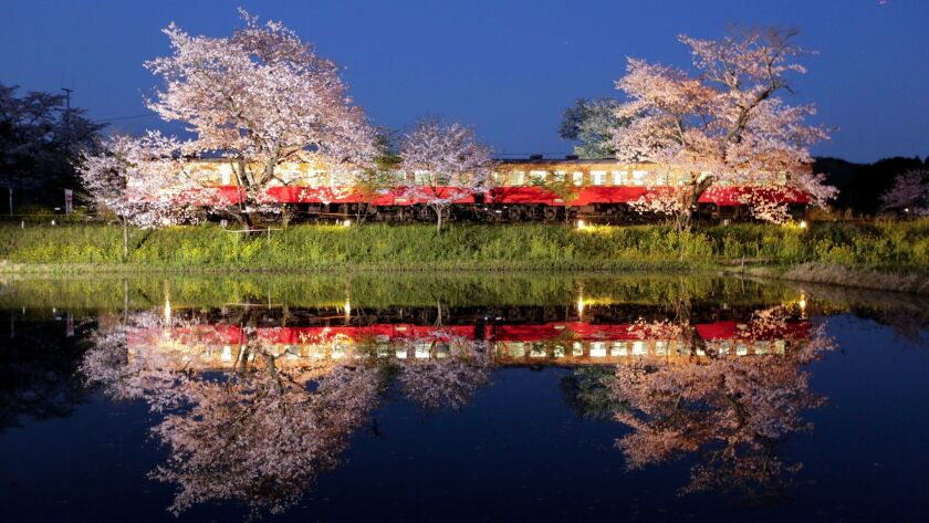 A two-car local train and cherry blossoms in full bloom are reflected on the water in Ichihara, east