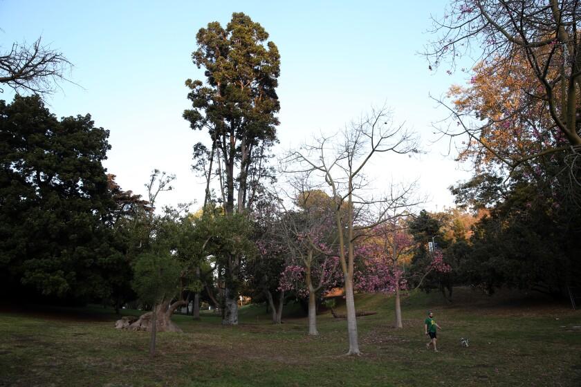 Elysian Park arboretum