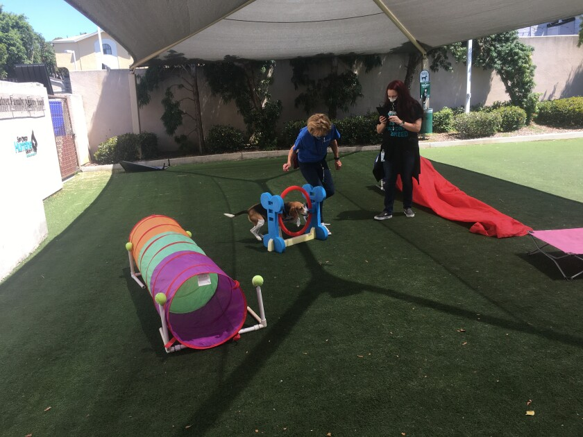 The San Diego Humane Society's popular summer camps teach kids about the proper care and protection of animals.