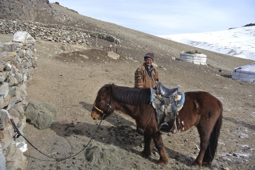 """In this photo taken Feb 17, 2016, Huyag Tserennyam, a herder, stands with his one lone surviving horse in the Ulziit district of Bayankhongor in Mongolia. It has been a harsh winter in Mongolia following an especially dry summer - a weather pattern known here as a """"dzud"""" - decimating the cattle of herders and leaving the Mongolian government poised to formally declare a dzud emergency, which would draw significant foreign aid.(AP Photo/Grace Brown)"""