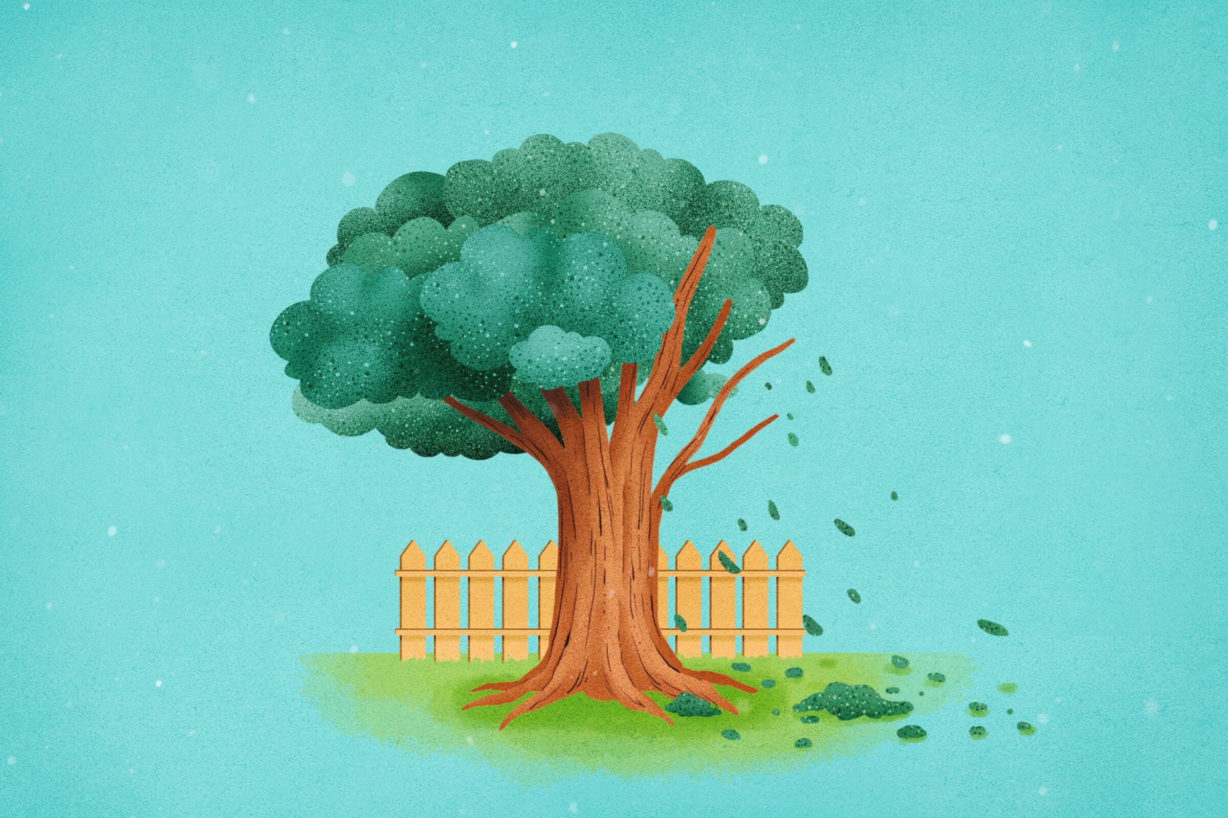 Plants - Dying tree