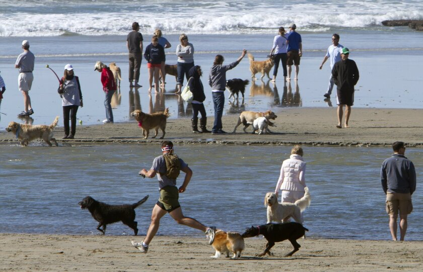 "It's San Diego County's ""other"" Dog Beach, located within barking distance of the Del Mar Fairgounds Del Mar Dog Beach"