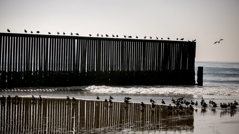 Birds fly around the border fence earlier this year.