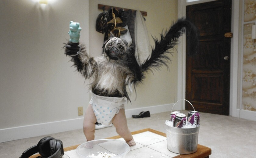 "This image provided by Mountain Dew shows the ""Puppymonkeybaby"" from the company's Kickstart spot for Super Bowl 50."