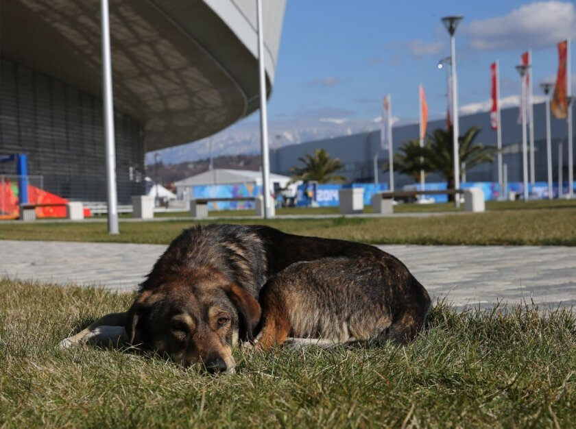 A stray dog lounges inside Olympic Park in Sochi.