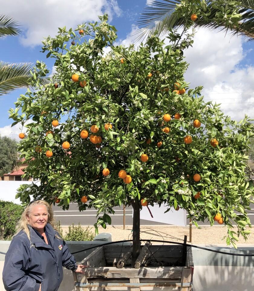Moon Valley Orange Tree.jpg