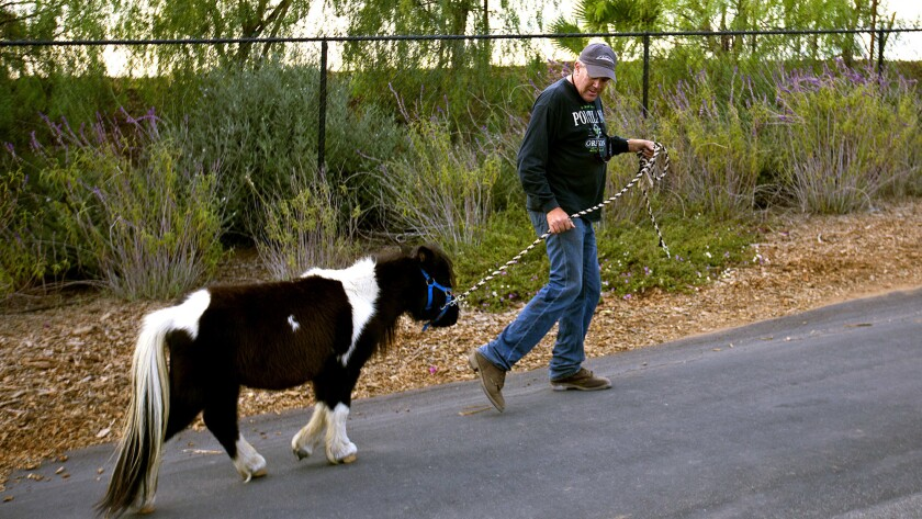 BONSALL, CA DECEMBER 9, 2017: Tom Marshall walks a lost pony to his property in Bonsall, CA. Local