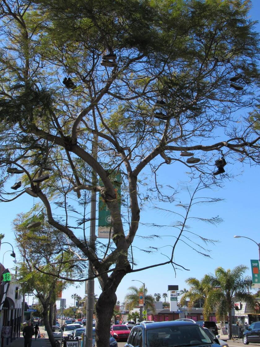 shoe-tree-vertical-20190307
