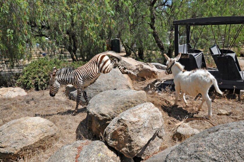 Animal rescue struggles after major benefactor dies - Ramona