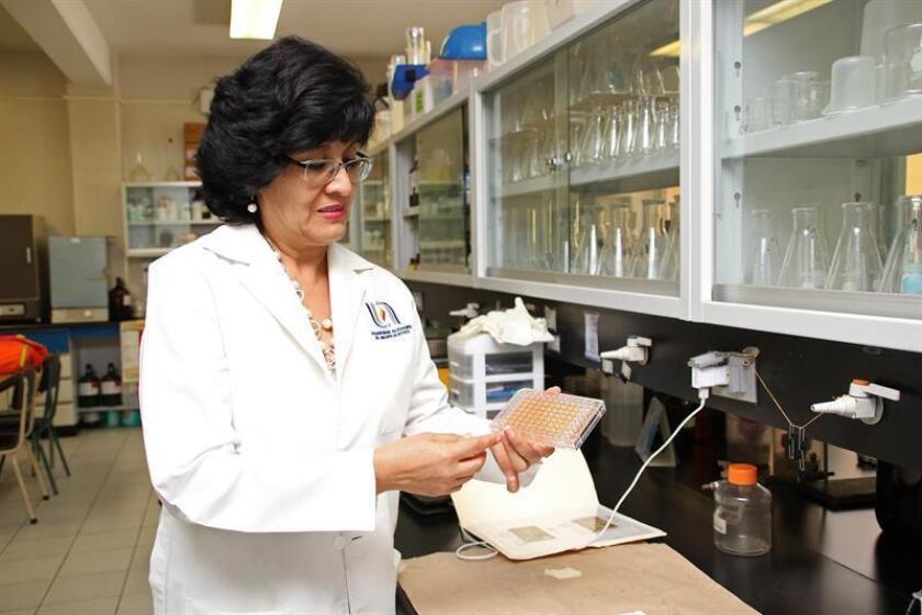 Fotografía cedida hoy, jueves 26 de julio de 2018, por la Universidad Autónoma de Aguascalientes (UAA), que muestra a la catedrática Norma Angélica Chávez, realizando pruebas de laboratorio, en la ciudad de Aguascalientes (México). EFE/UAA/SOLO USO EDITORIAL