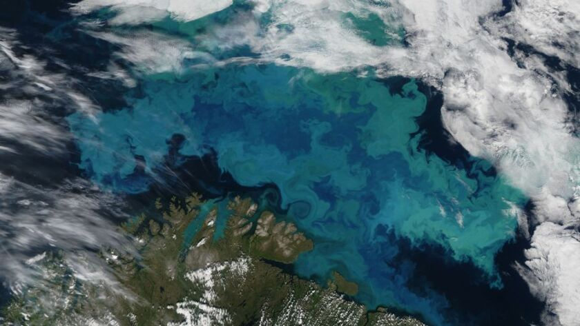 The milky white clouds in this algal bloom in the Barent Sea, off Norway and Russia, are the result of phytoplankton forming calcified shells.