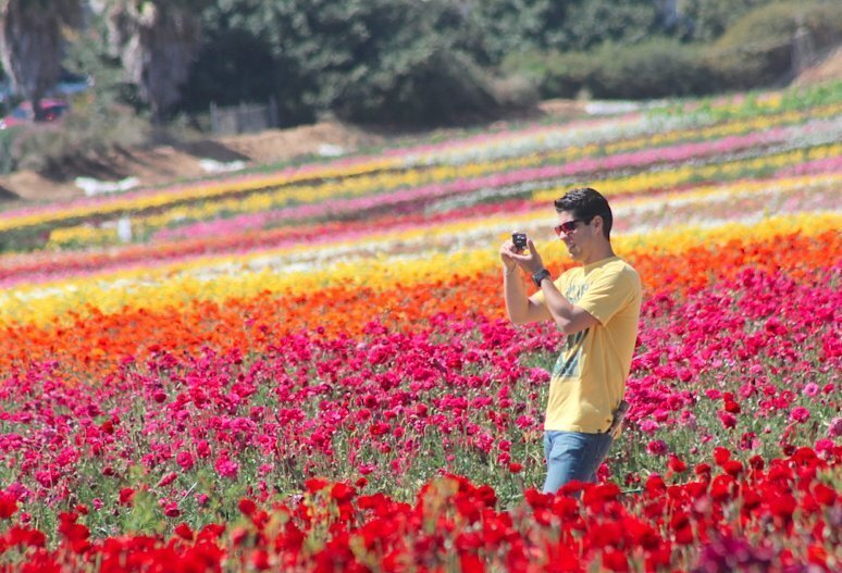 Fantastic Flower Fields