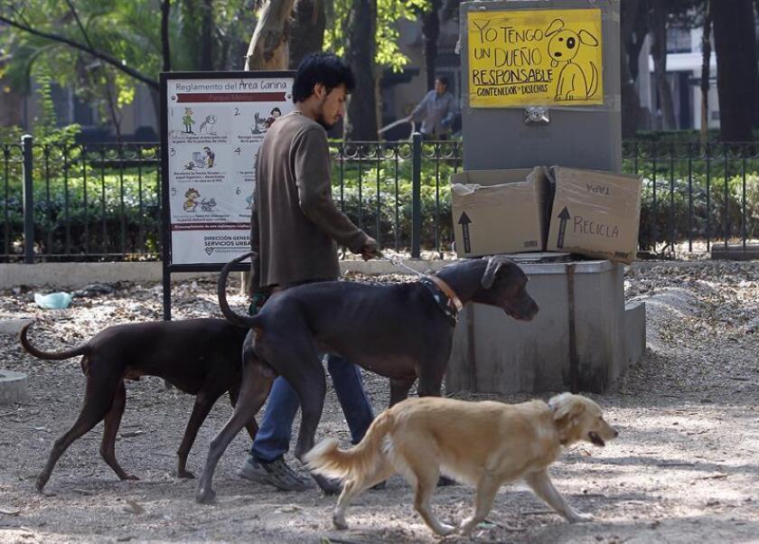 Un hombre pasea perros en un parque hoy, jueves 4 de enero de 2017, en Ciudad de México (México). El fecalismo es un grave problema de salud en la Ciudad de México, donde se estima que cada año se emite al aire de esta entidad media tonelada de residuos fecales, lo que es un factor potencial de transmisión de enfermedades, alertó hoy una especialista. EFE