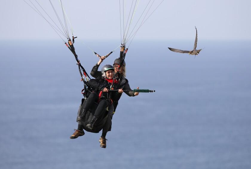David Metzgar flies a tandem paraglider with Martina Manisova as his lanner falcon Bunco follows as they parahawk in La Jolla on Jan.14, 2020.