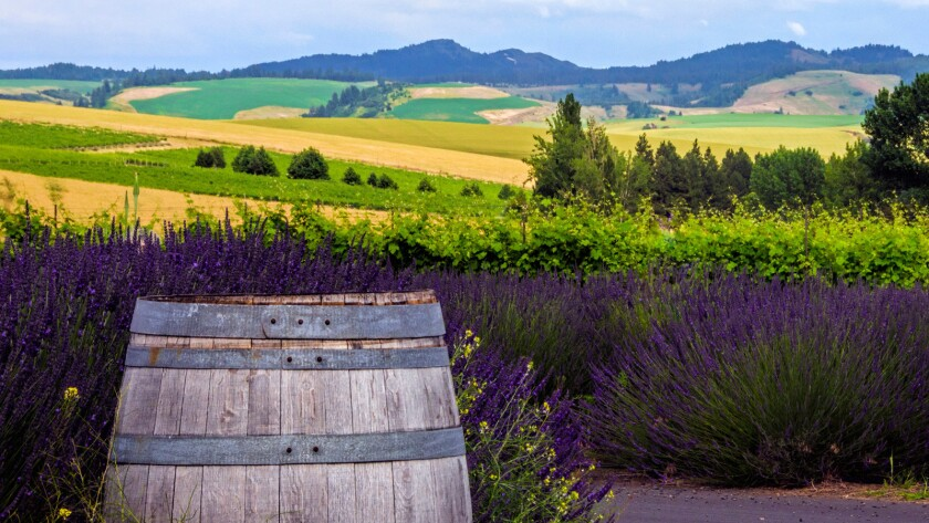 The Gran Fondo route takes riders on varied terrain with breathtaking views of the Blue Mountains and the diverse agriculture of the Walla Walla Valley.